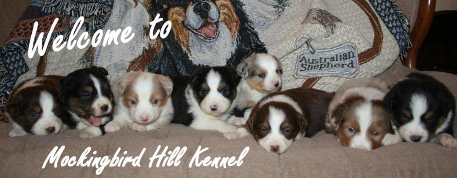 Since 1987 Mockingbird Hill Kennel has raised quality puppies for